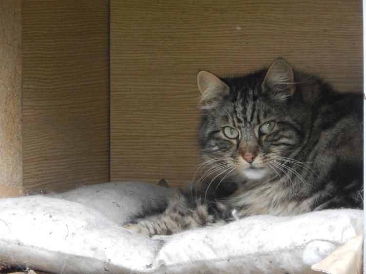 cat in a crate
