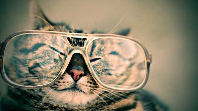 cat_in_glasses